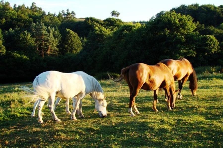 Les Renardieres paardjes 2.jpg Les Renardières 30pluskids image gallery