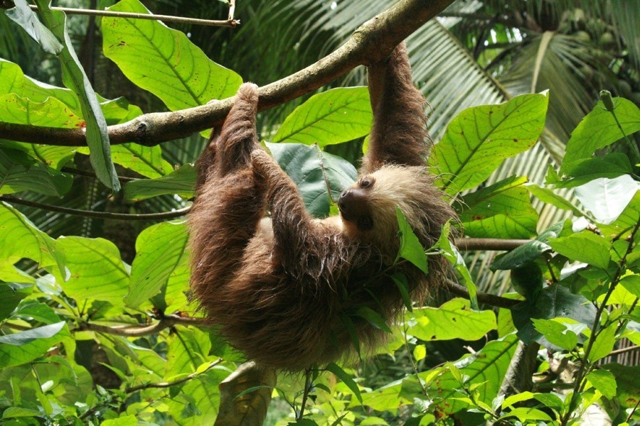 Travelnauts Costa Rica - Jungle Luiaard x Travelnauts Costa Rica  30pluskids image gallery