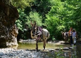 Altratoscana in Toscane, Italie ezels in beekje Altratoscana 30pluskids