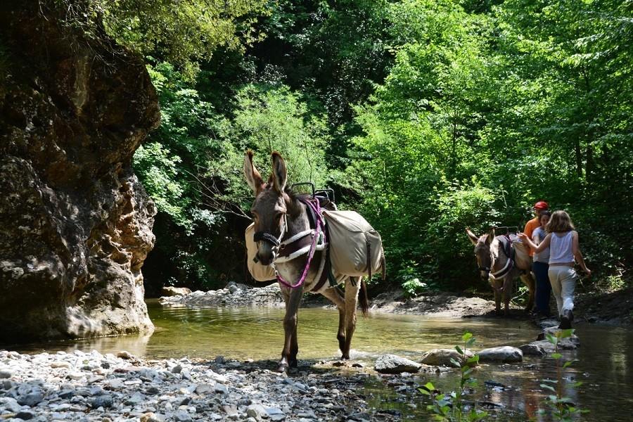 Altratoscana in Toscane, Italie ezels in beekje Altratoscana 30pluskids image gallery