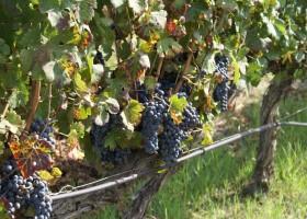 Tritt Case in Sardegna Agriturismo Alghero druiven Agriturismo Borgo Caterina 30pluskids