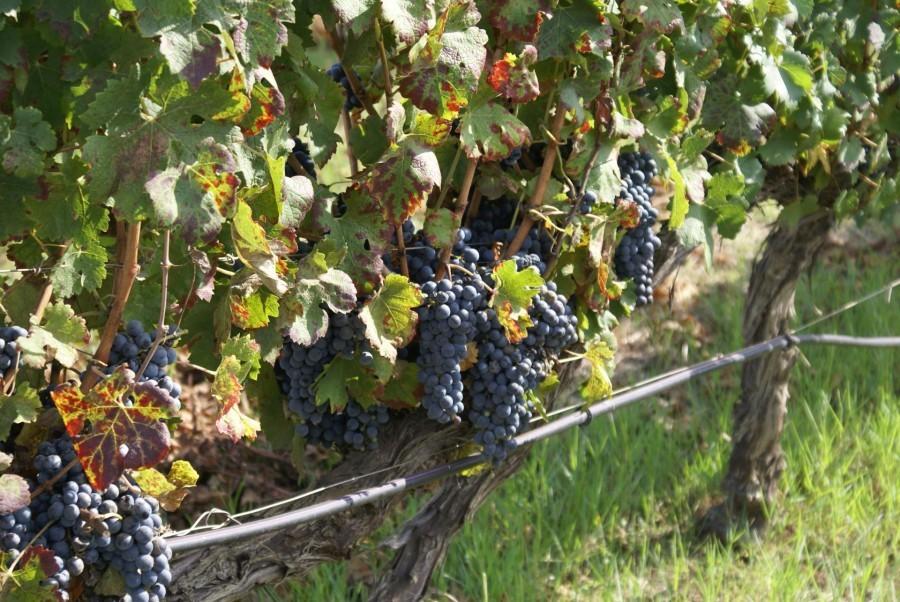 Tritt Case in Sardegna Agriturismo Alghero druiven Agriturismo Borgo Caterina 30pluskids image gallery