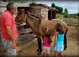 Quinta Antes o Vento in Portugal paard verzorgen Quinta Antes o Vento 30pluskids