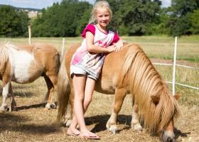 Domaine des Lilas in de Auvergne, Frankrijk pony's Domaine des Lilas 30pluskids
