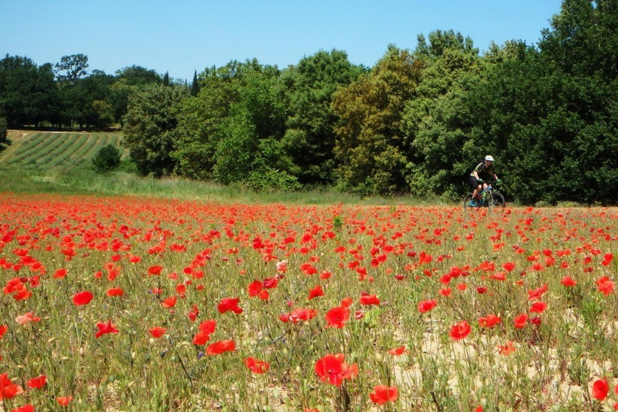 3311_11.jpg Domaine Goûts de Provence 30pluskids image gallery