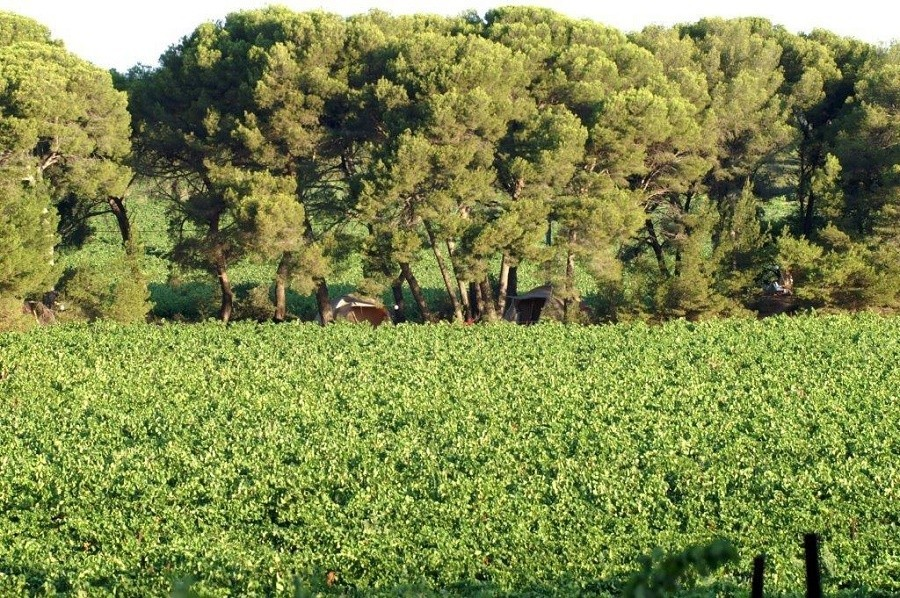 Domaine St Paul le Marseillais in de Languedoc-Rousillon Frankrijk tenten in het pijmboombos Domaine Saint Paul le Marseillais  30pluskids image gallery