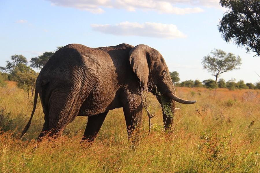 Homes of Africa in Hoedspruit, Zuid-Afrika veel giraffen (25) Homes of Africa vakantiehuizen 30pluskids image gallery