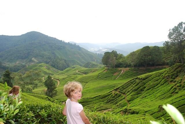 742_1.jpg KidsReizen - Explore Maleisië 30pluskids image gallery