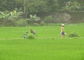Travelnauts rondreis Vietnam 03 Zeilen, rijstvelden en markten in Vietnam met kinderen 30pluskids