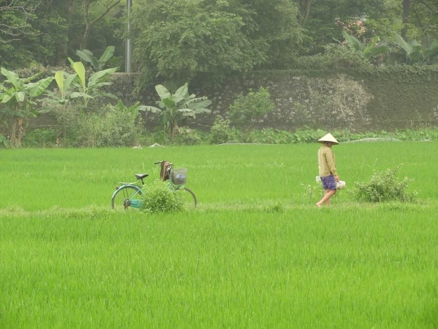 Travelnauts rondreis Vietnam 03 Zeilen, rijstvelden en markten in Vietnam met kinderen 30pluskids image gallery