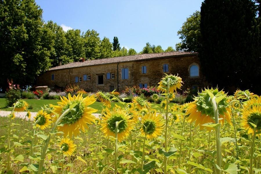 Domaine Les Platanes in Zuid-Frankrijk zonnebloemen Domaine Les Platanes 30pluskids image gallery