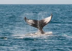Travelnauts rondreis noorwegen-gezinsreis-activiteit-walvis-spotten Rondreis Noorwegen 30pluskids