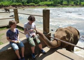 Travelnauts rondreis Sri Lanka 08 Safari, theeplantages en grottempels in Sri Lanka 30pluskids