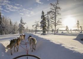Travelnauts rondreis finland-apland-hondenslee-huskies-sneeuw-winter Familiereis winters Lapland 30pluskids