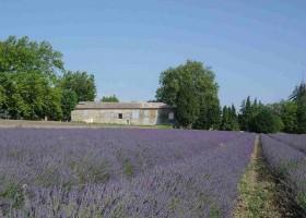 Domaine les Platanes in Zuid-Frankrijk lavendelvelden Domaine Les Platanes 30pluskids