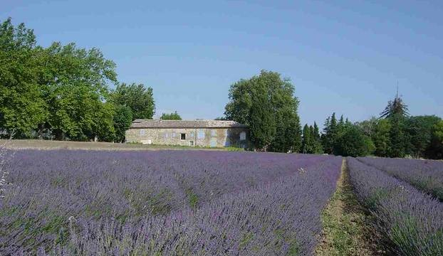 Domaine les Platanes in Zuid-Frankrijk lavendelvelden Domaine Les Platanes 30pluskids image gallery