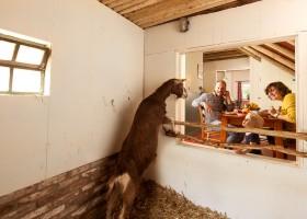 D'Olde Kamp in Drenthe, Nederland raam met uitzicht op geit d'Olde Kamp recreatie 30pluskids