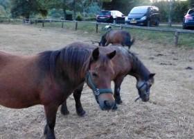 Les Renardieres paardjes.jpg Les Renardières 30pluskids