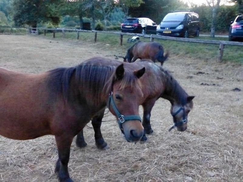 Les Renardieres paardjes.jpg Les Renardières 30pluskids image gallery