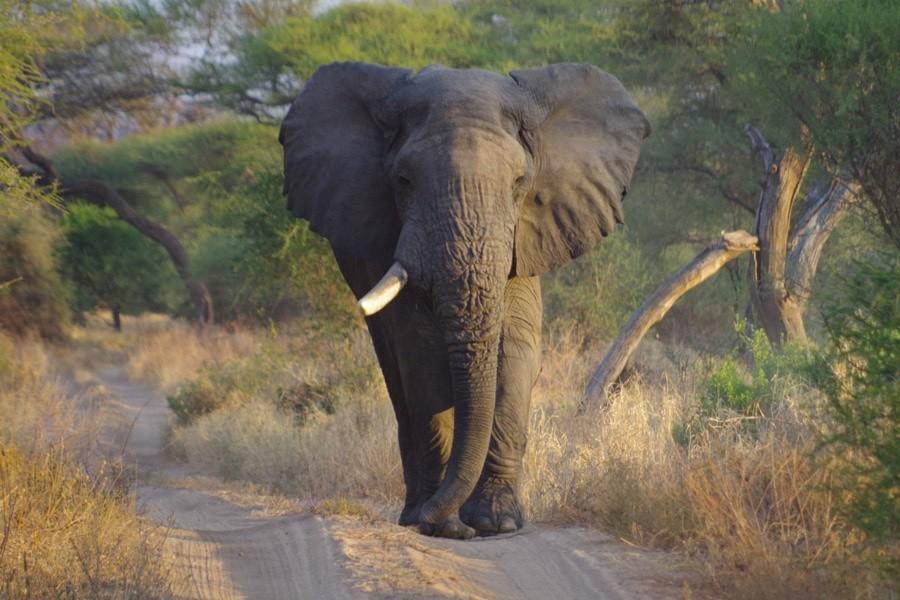 Travelnauts Tanzania - Safari Travelnauts 30pluskids image gallery