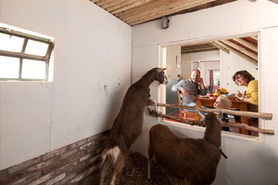 D'Olde Kamp in Drenthe, Nederland uitzicht op geiten d'Olde Kamp recreatie 30pluskids image gallery