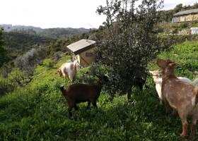Quinta Vida Verde in Macieira Almoster, Portugal geiten Quinta Vida Verde 30pluskids