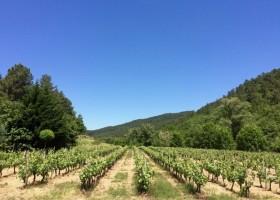 Le Moulin de Lande wijngaard x.jpg Le Moulin de Lande 30pluskids