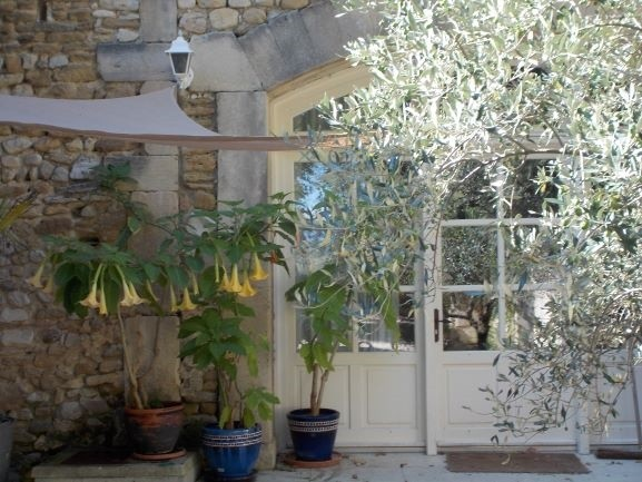 Domaine Les Platanes in Zuid-Frankrijk lorangerie cour interieur met olijfboom Domaine Les Platanes 30pluskids image gallery