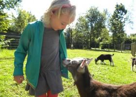 D'Olde Kamp in Drenthe, Nederland kind met geiten d'Olde Kamp recreatie 30pluskids