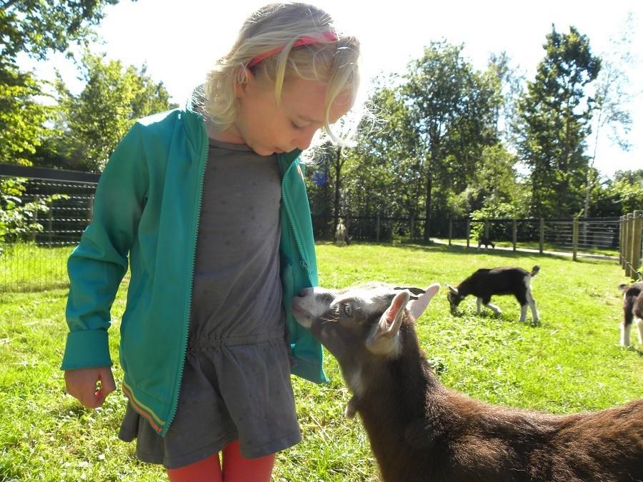D'Olde Kamp in Drenthe, Nederland kind met geiten d'Olde Kamp recreatie 30pluskids image gallery
