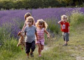 Domaine les Platanes in Zuid-Frankrijk kinderen lavendelveld Domaine Les Platanes 30pluskids