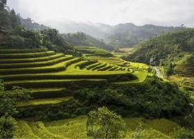 KidsReizen Vietnam sapa rijstvelden KidsReizen Vietnam 21-daagse rondreis  30pluskids