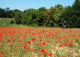 Gouts de Provence omgeving1.jpg Domaine Goûts de Provence 30pluskids