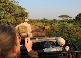 Homes of Africa in Hoedspruit, Zuid-Afrika veel giraffen (3) Homes of Africa vakantiehuizen 30pluskids