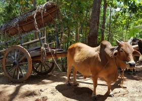Travelnauts rondreis Sri Lanka 01 Safari, theeplantages en grottempels in Sri Lanka 30pluskids