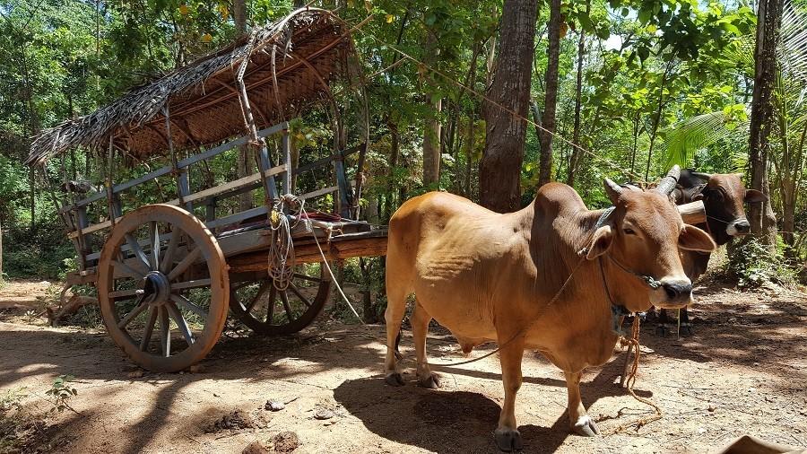 Travelnauts rondreis Sri Lanka 01 Safari, theeplantages en grottempels in Sri Lanka 30pluskids image gallery