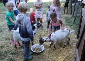 Domaine des Lilas in Saint Germain Lembron, Frankrijk kinderboerderij Domaine des Lilas 30pluskids