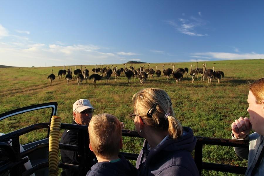 Riksja Family rondreis Zuid-Afrika struisvogels Riksja Family Zuid-Afrika 30pluskids image gallery