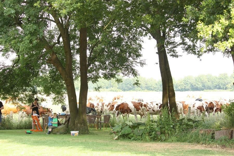 Droste's Boerderijlodges in Twente - Beuningen - aan tafel met de koeien... Droste's Boerderijlodges 30pluskids image gallery