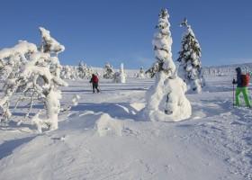 Travelnauts rondreis finland-lapland-sneeuw-winter-skien-sport Familiereis winters Lapland 30pluskids