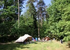 Vlintenholt in Drenthe, Nederland kamperen in het groen 3 't Vlintenholt 30pluskids