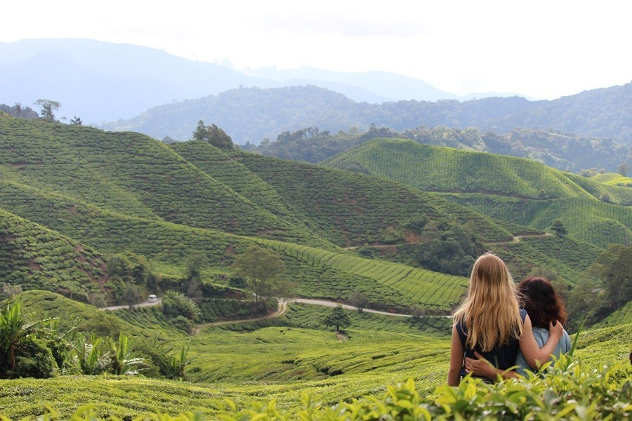 Travelnauts rondreis Maleisie cameron-highlands Kuala Lumpur, jungle, theeplantages in Maleisië 30pluskids image gallery